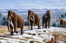 Late Pleistocene woolly mammoths.